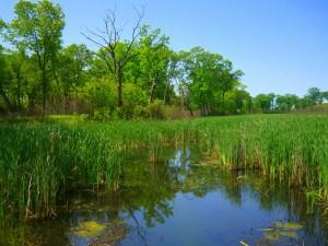 Wetlands of Miller Woods